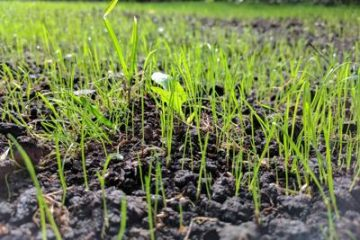 Seeding the Right IoT Architecture to Build a Better Farm
